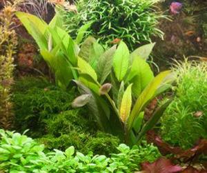 aquarium advies